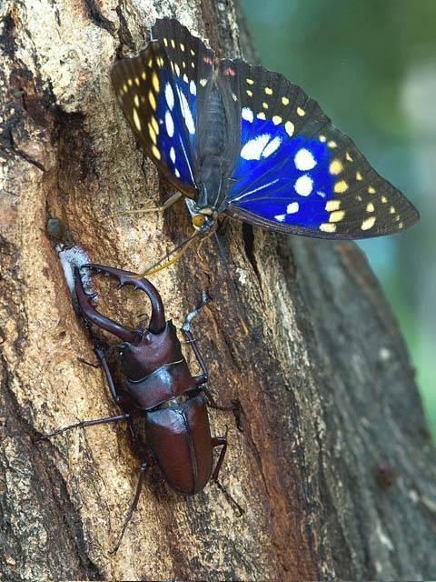 群馬県立ぐんま昆虫の森