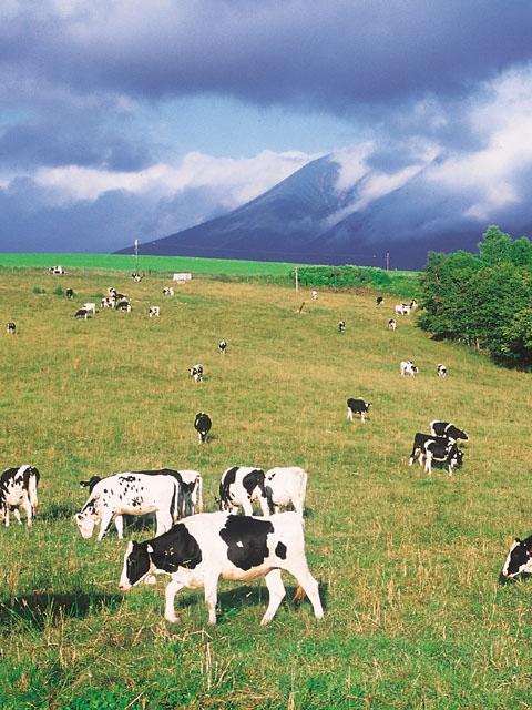 白金模範牧場