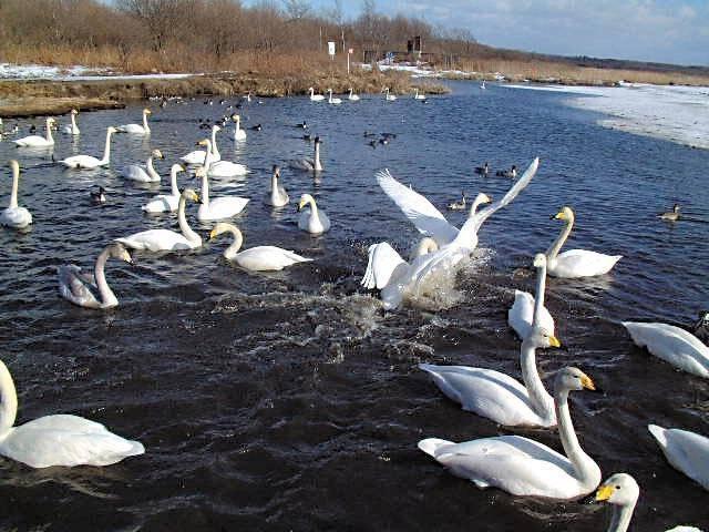 日本野鳥の会ウトナイ湖サンクチュアリ