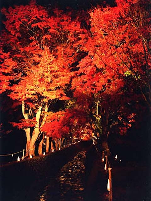 富士河口湖紅葉まつり
