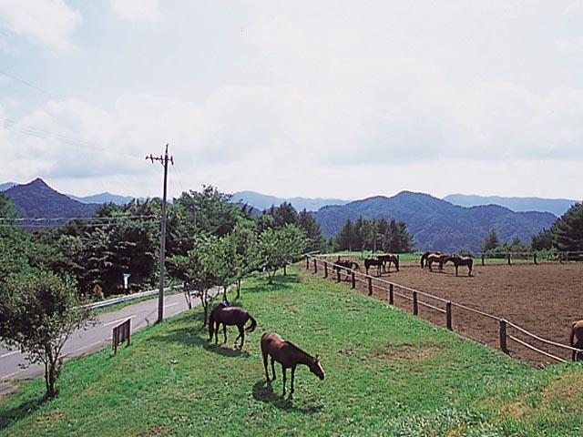 スエトシ牧場