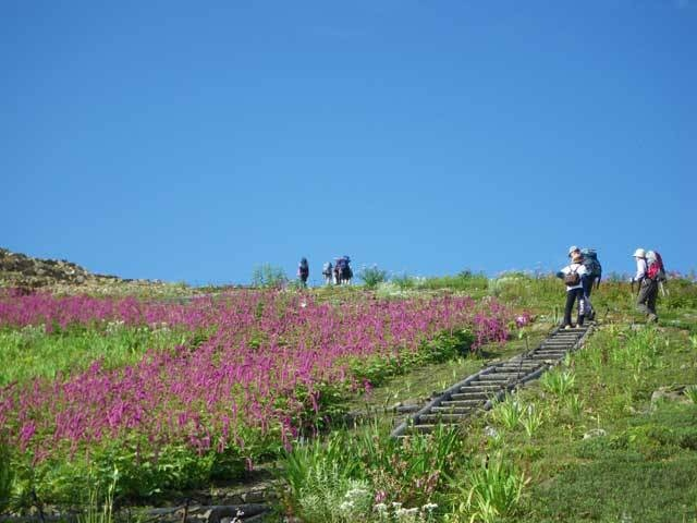 白馬五竜高山植物園・アルプス平自然遊歩道