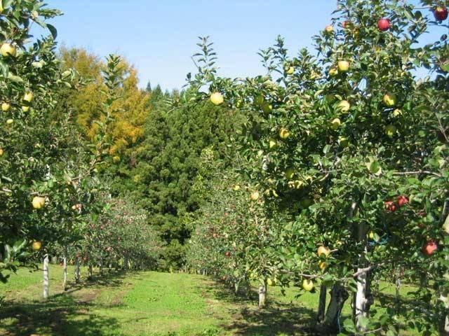 りんご観光農園