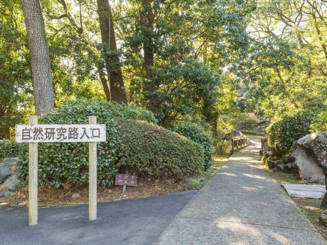 城ヶ崎自然研究路コース