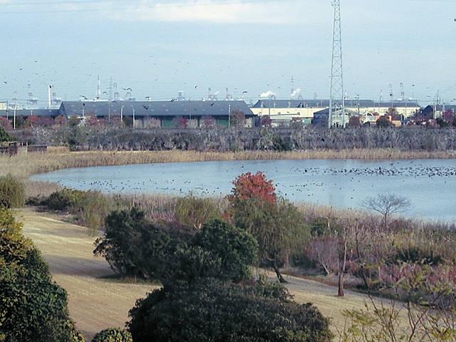 愛知県弥富野鳥園