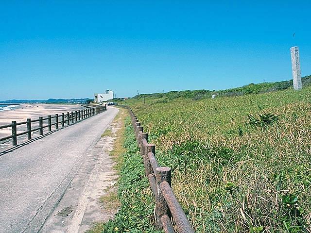 太東海浜植物群落地
