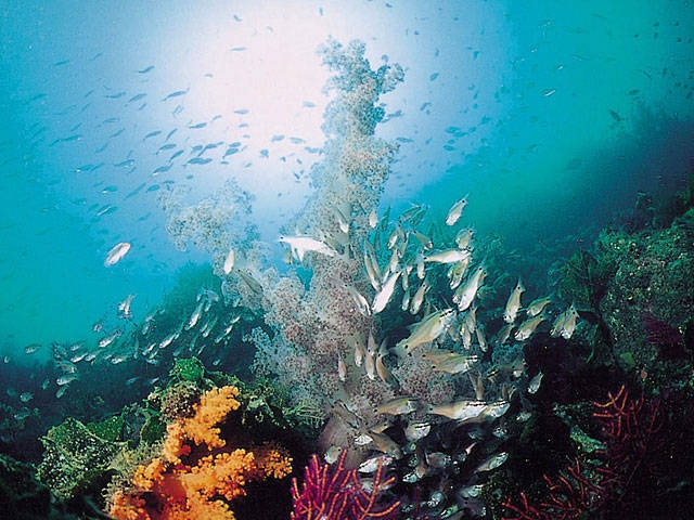 牛深海中公園