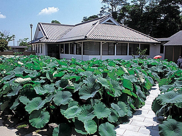 近江妙蓮公園