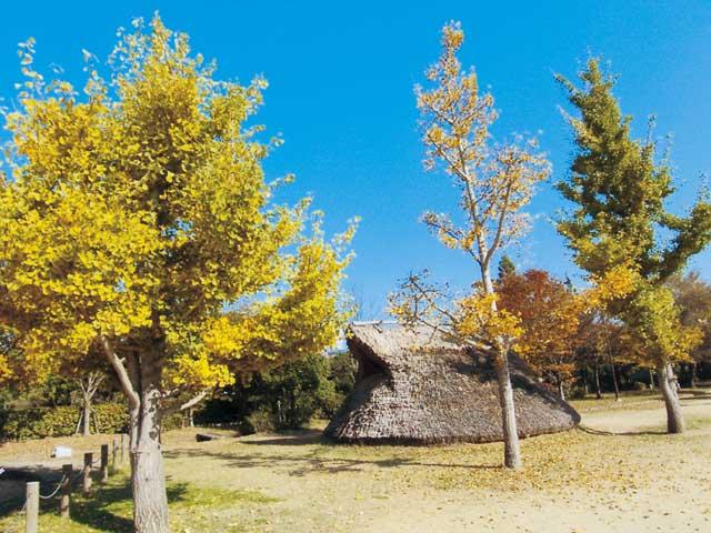 播磨大中古代の村