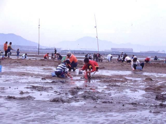 長井浜海水浴場(マテガイ掘り)