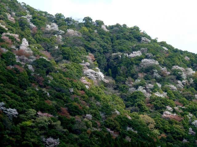 川中自然公園